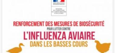 Risque influenza aviaire élevé